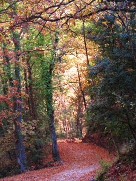 Sentiero per l'Eremo della Sambuca in autunno