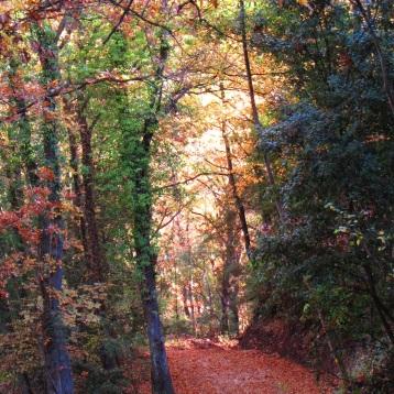 Escursione Valle Benedetta, Monti Livornesi