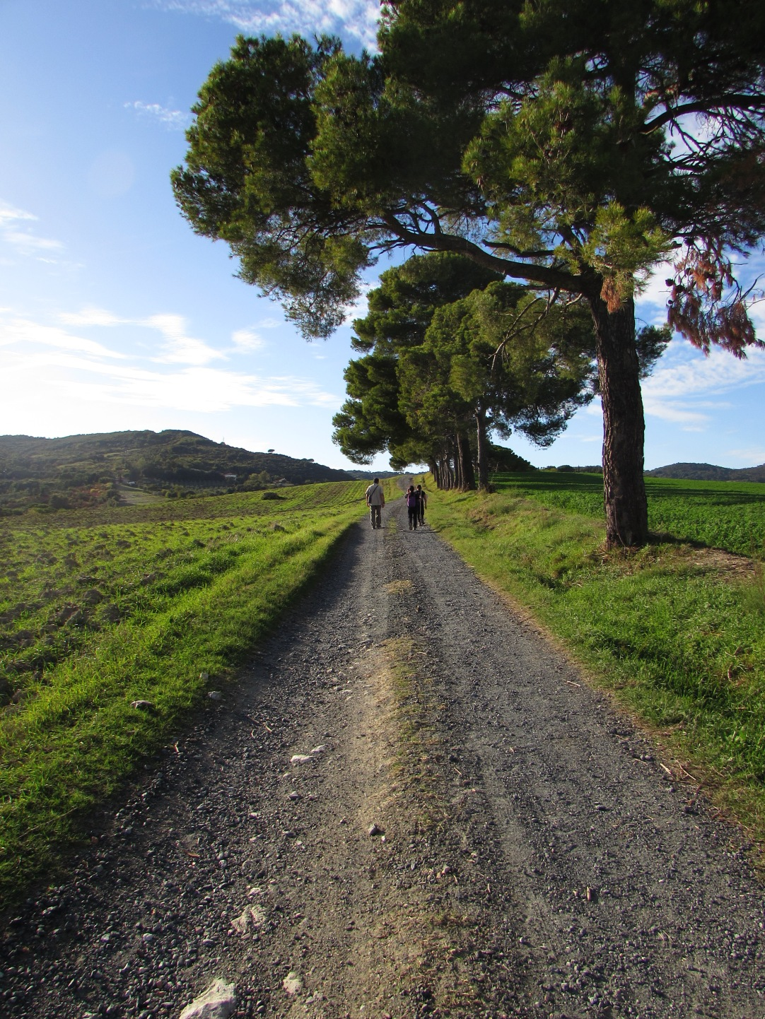 Passeggiata tra Colline Toscane